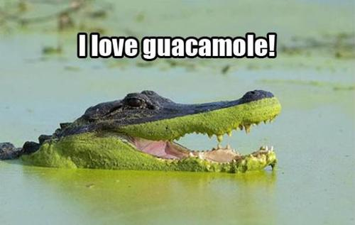 crocodile, alligator, I love guacamole, meme