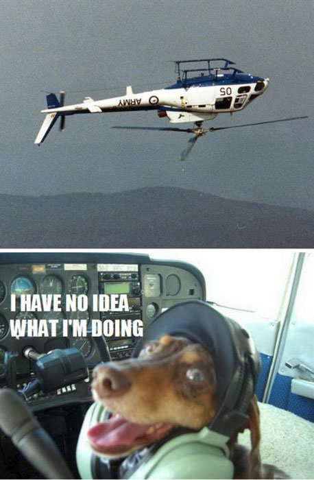 helicopter, upside down, dog pilot, wtf, no idea what i'm doing