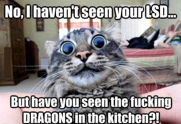 meme, cat, lsd, dilated pupils