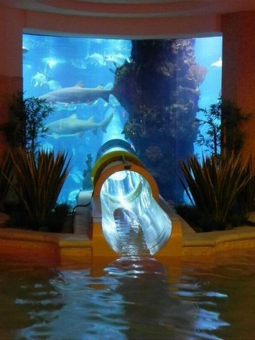 water slide through giant fish tank, aquarium, win