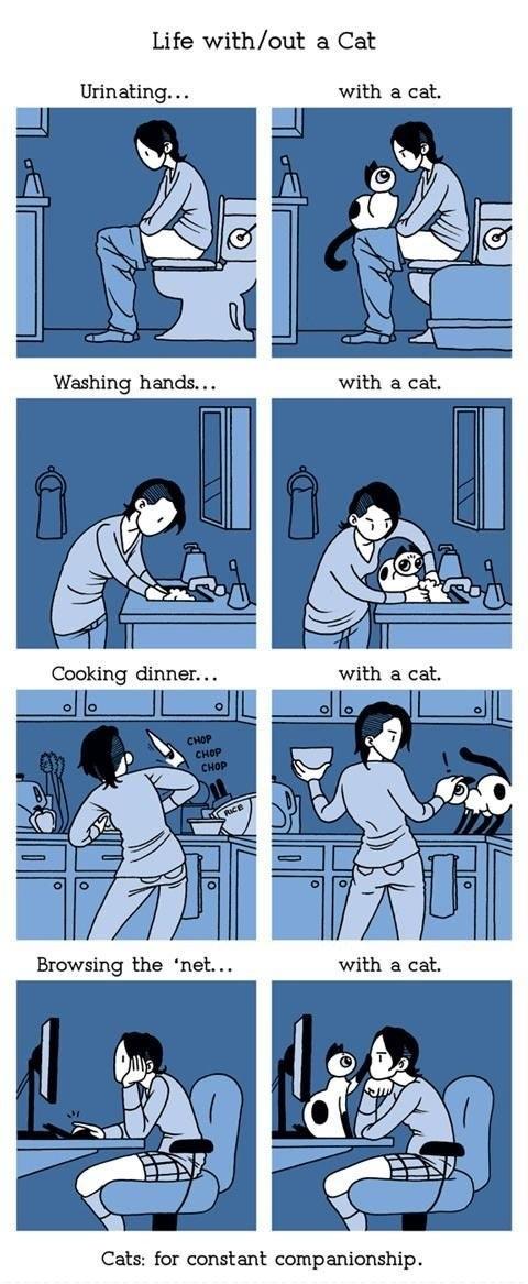 with a cat, companion, comic