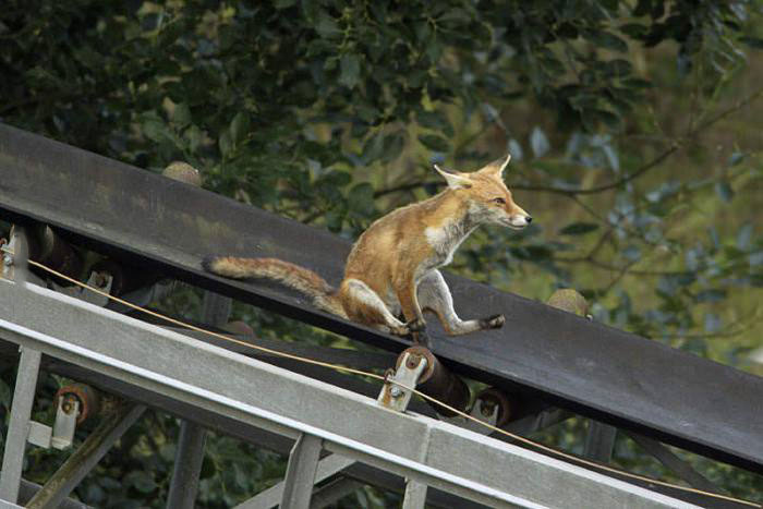 fox, slide, mining equipment and machinery, infrastructure, nature versus man made objects