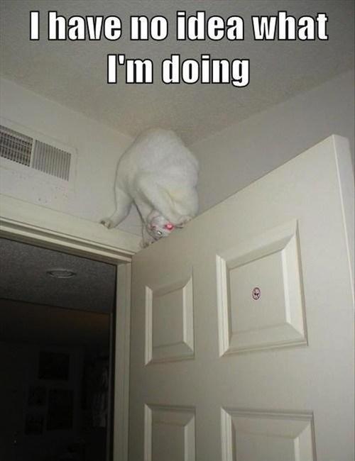 cat, i have no idea what i am doing, door, wtf