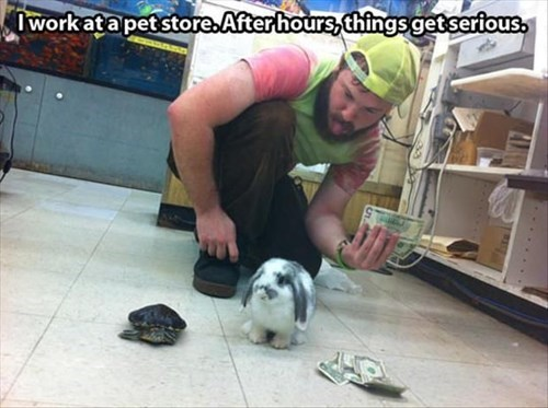 i work at a pet store, after hours things get serious, lol, rabbit, turtle, cash