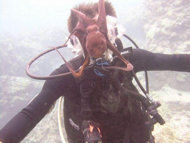 octopus, oxygen, scuba diver