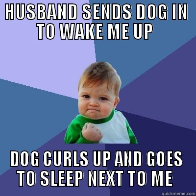 husband sends dog in to wake me up, dog curls up and goes to sleep next to me, win kind, meme