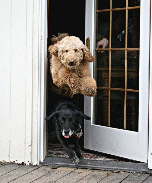 dog, timing, jump, door