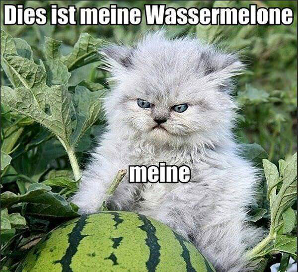 cat, grumpy, watermelon, wassermelone, meme, meine, german