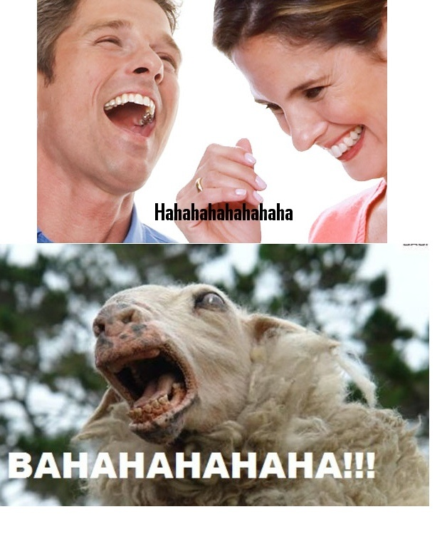 what i think when people say bahahahaha, sheep