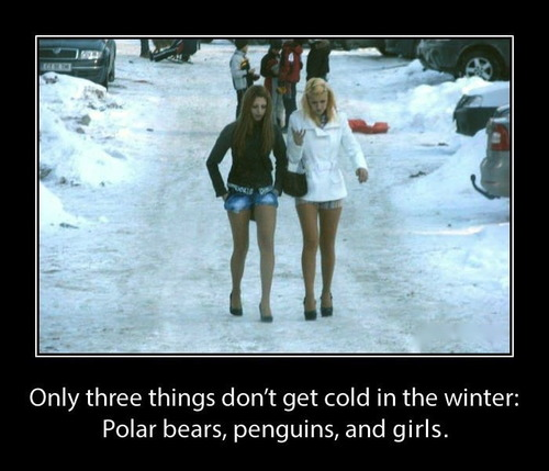 motivation, women, only three things don't get cold in winter, polar bears, penguins and girls