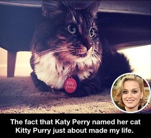 katy perry, kitty purry, cat, name