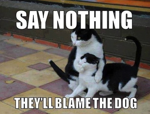 meme, cat, say nothing, they'll blame the dog