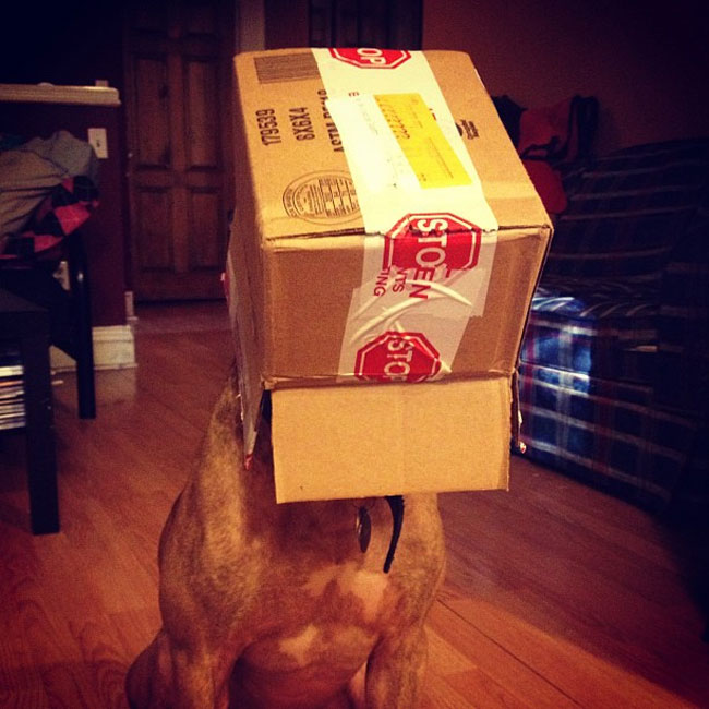 dog, balancing objects on his head, special ability, self control