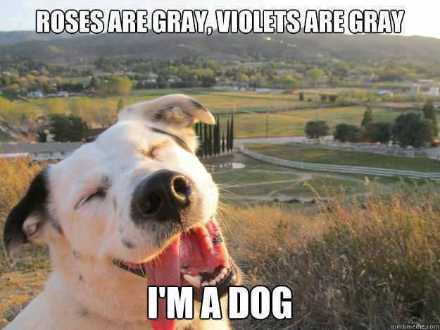 meme, roses are gray, violets are gray, i'm a dog, color blind, meme, lol