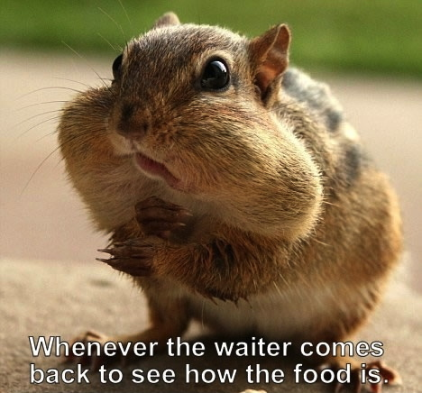 meme, squirrel, cheeks full of food, when the waiter comes back to ask how the food is