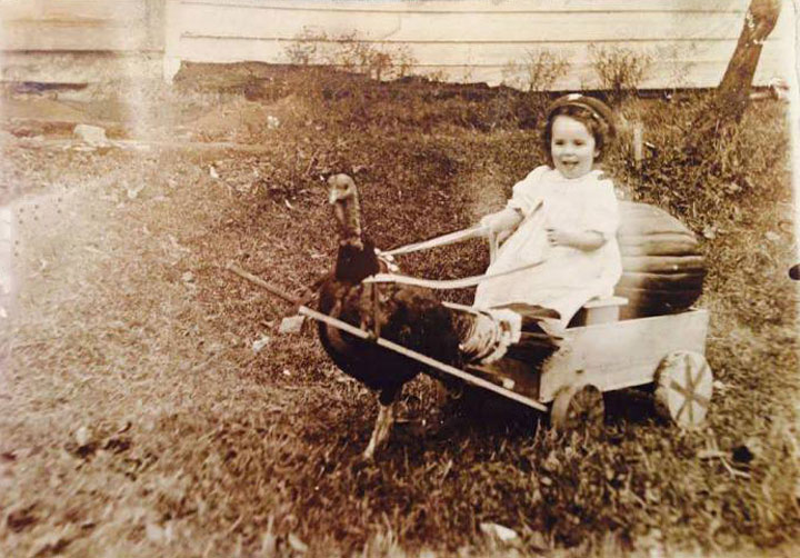 little girl in sled pulled by turkey, thanksgiving, wtf