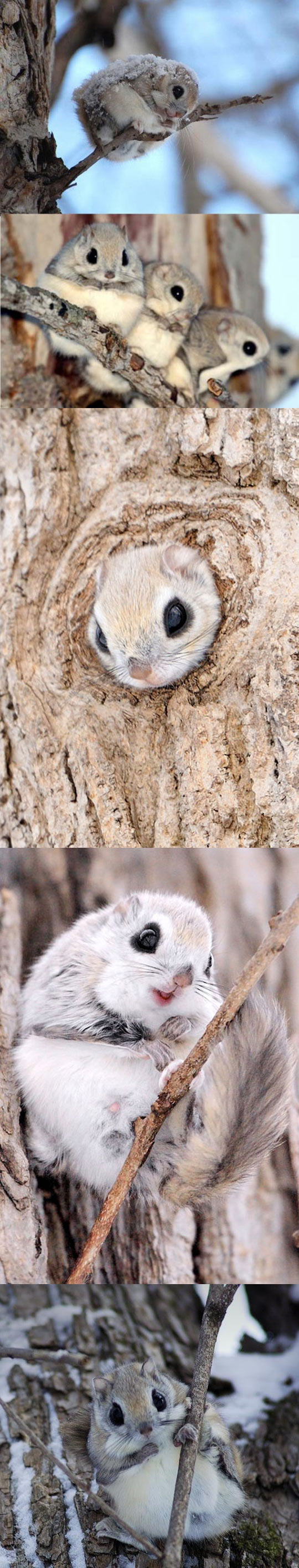 i don't know what they are, but i need one, cute animal