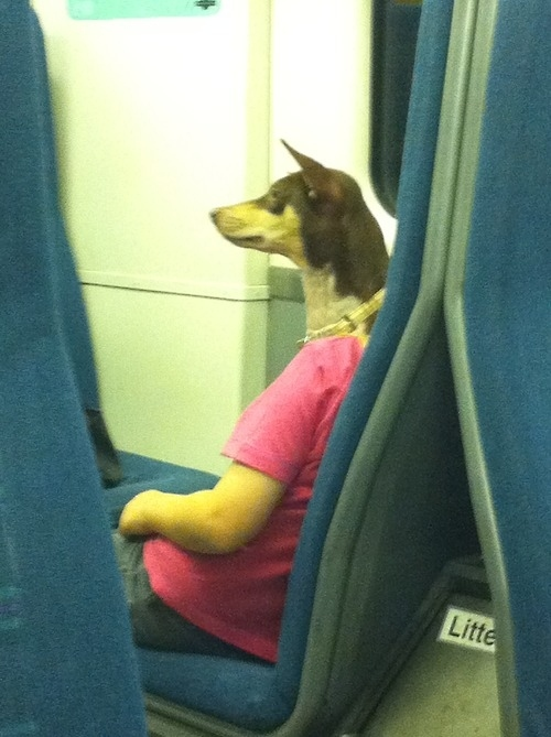 optical illusion, wtf, dog on bus, sleeping woman, perspective