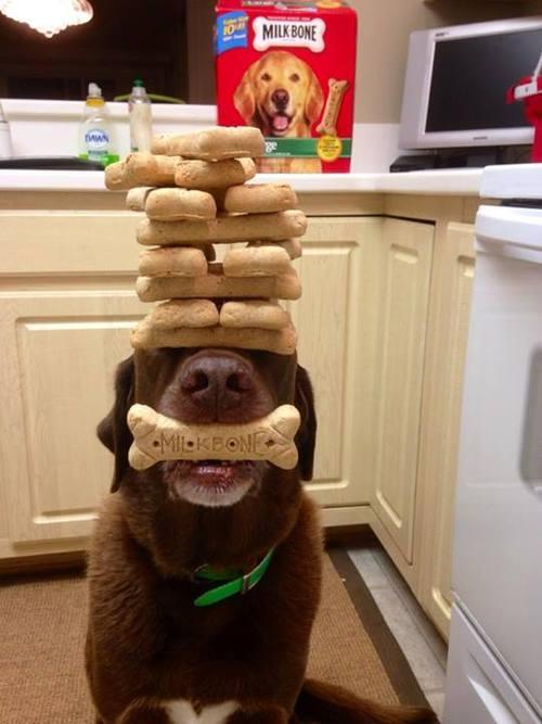 dog bones, self control, cookies, balance