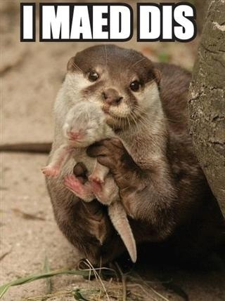 i made this, otter, baby, meme