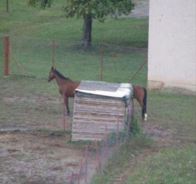 optical illusion, long horse