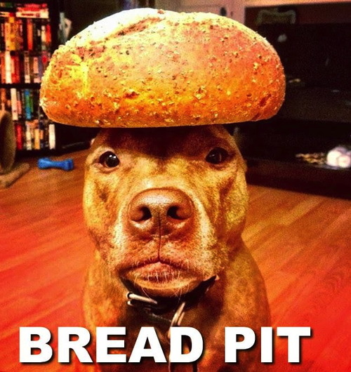 dog balancing a loaf of bread on his head, bread pit, wordplay, meme