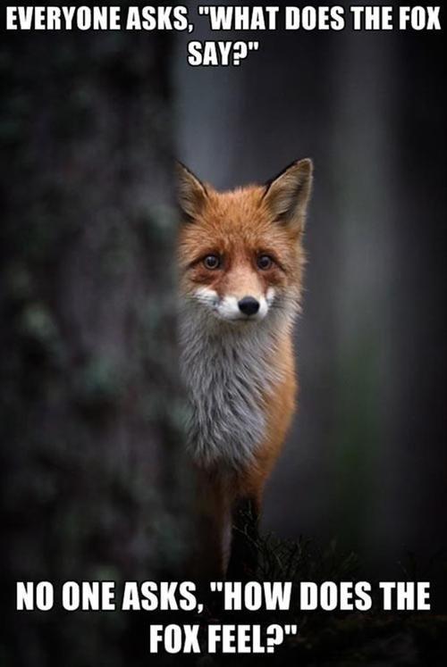 how does the fox feel, meme