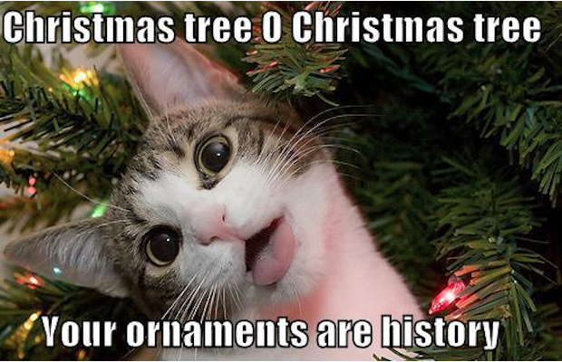 christmas tree, your ornaments are history, cat, meme