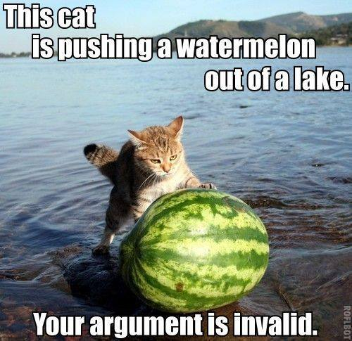 this cat is pushing a watermelon out of a lake, your argument is invalid