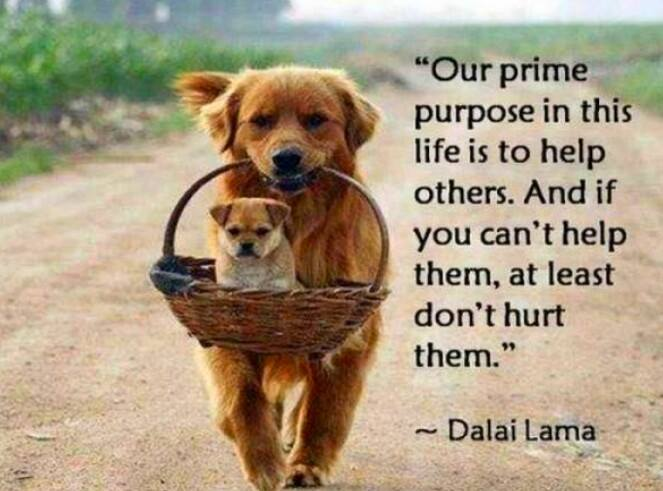 our prime purpose in this life is to help others and if you can't help them at least don't hurt them, quote, dalai lama