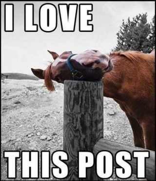 i love this post, horse, meme