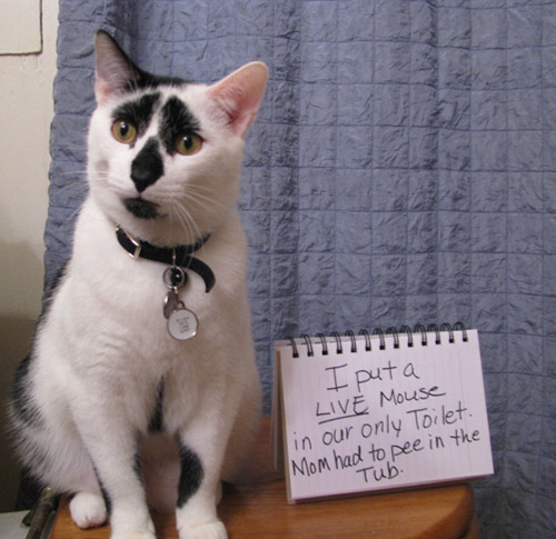 the 27 naughtiest cats in the world, lol, signs, scumbag felines