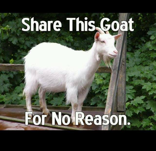 share this goat for no reason