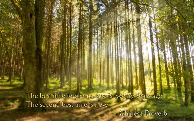 the best time to plant a tree is twenty years ago. the second best time is now, chinese proverb