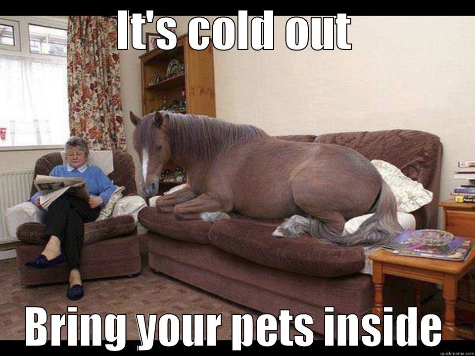 it's cold out bring your pets inside, meme, horse on a couch