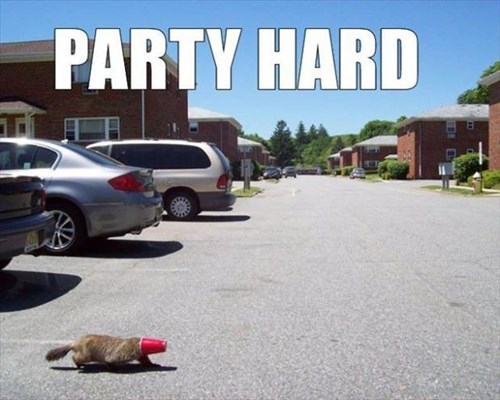 party hard, beaver with red beer cup on his face