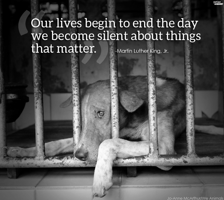 our lives begin to end the day we become silent about things that matter, martin luther king jr, quote