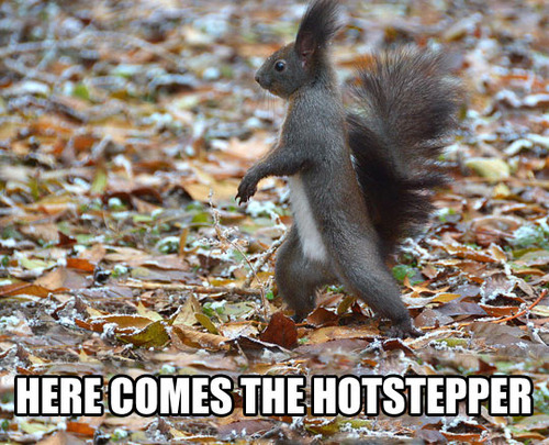 here comes the hotstepper, squirrel walking, meme