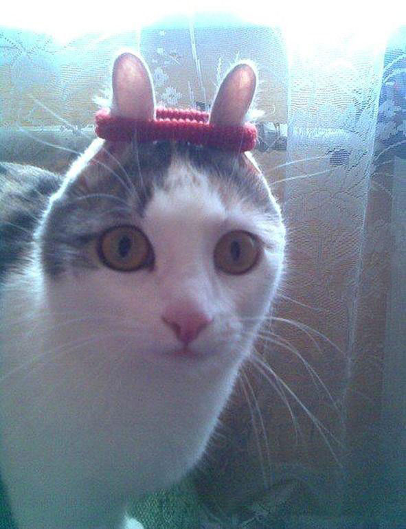 Cats Ears Hair Band Cat With Hair Band on Ears