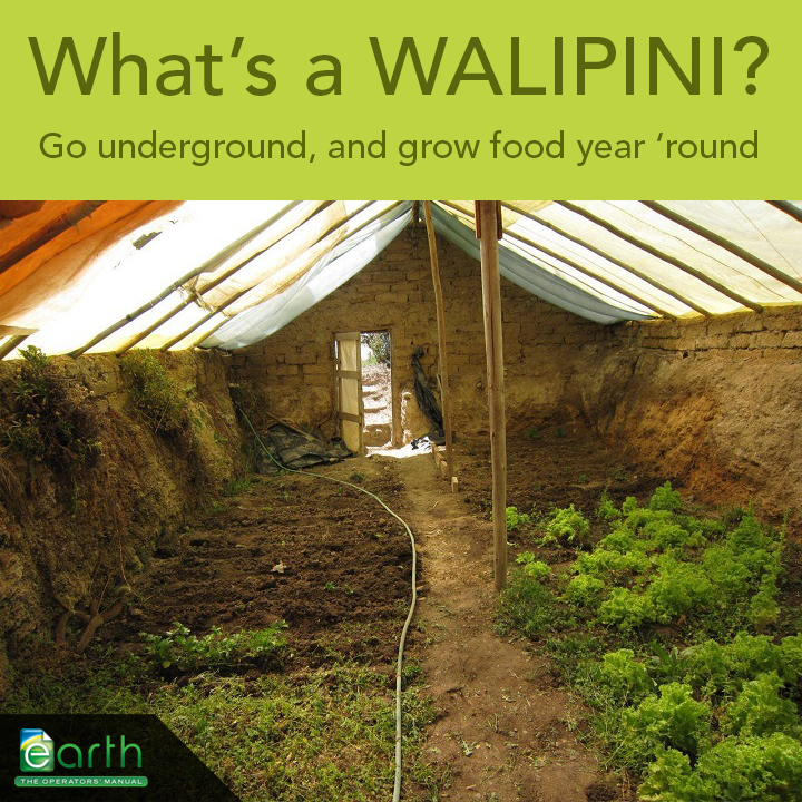 what's a walipini?, green house, sustainable living