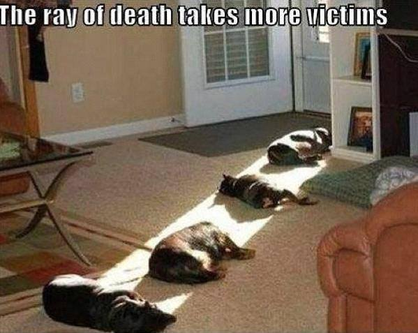 the ray of death takes more victims, cats enjoying the sunlight