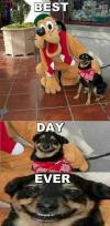 best day ever, smiling dog