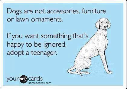 ecard, dogs are not accessories, furniture or lawn ornaments, if you want something that's happy ro be ignored, adopt a teenager