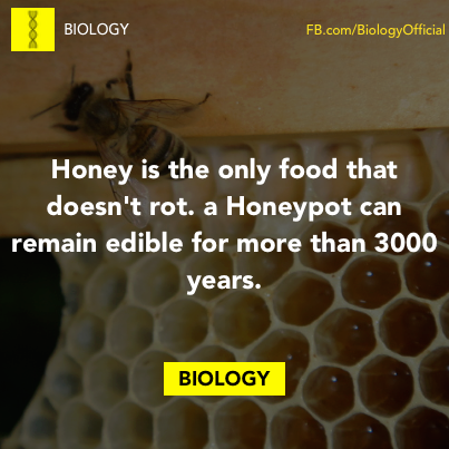 honey is the only food that doesn't rot, a honeypot can remain edible for more than 3000 years, biology facts, science