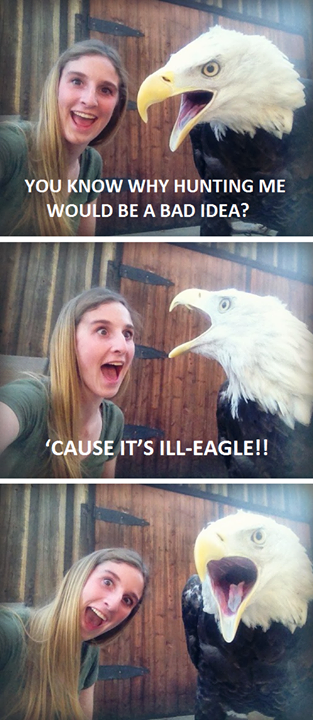 you know why hunting me would be a bad idea, cause it's ill-eagle, wordplay, bad pun eagle