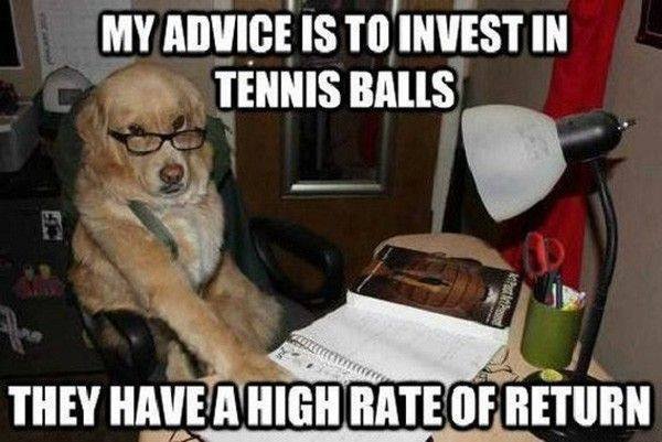 accountant dog meme, my advice is to invest in tennis balls, they have a high rate of return