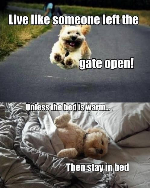 live like someone left the gate open, unless the bed is warm... then stay in bed