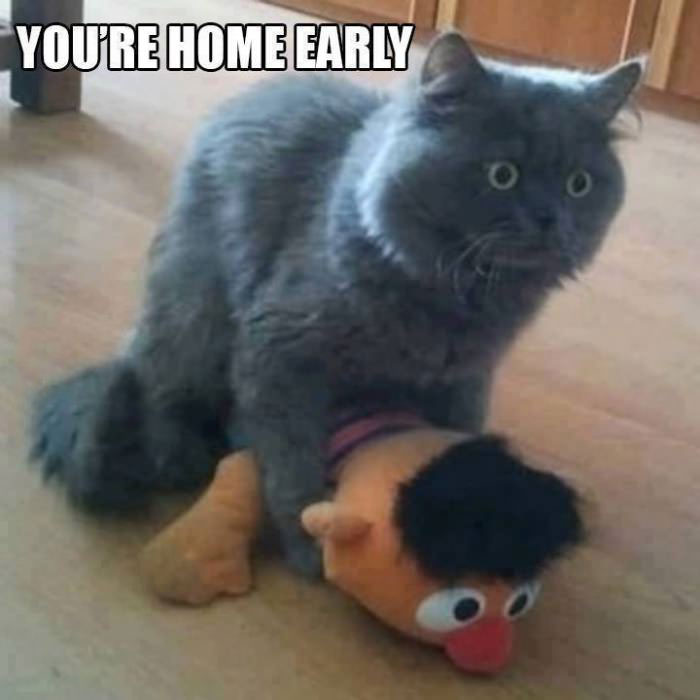 cat humping ernie, you're home early