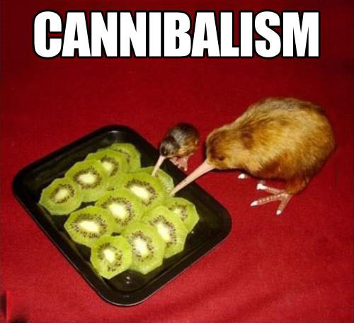 cannibalism, kiwi fruit and bird, meme
