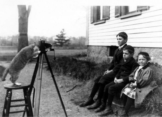 cat taking old time photo of kids in black and white, wtf
